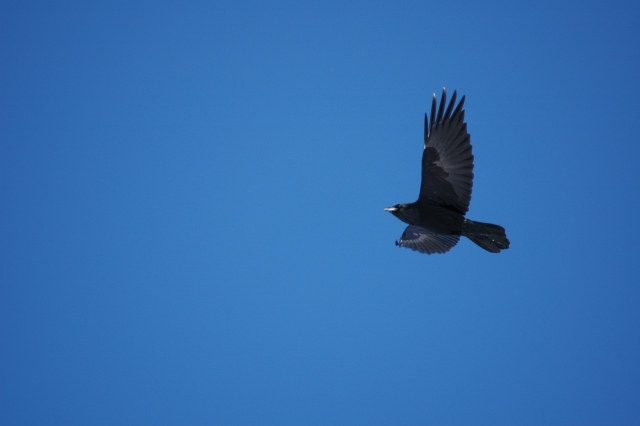 The raven, April 2008